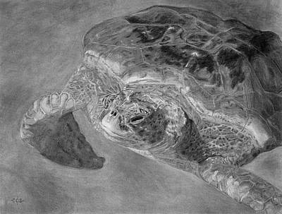 Aquatic Life Drawing - Sea Turtle At Grand Cayman by Christina Steward