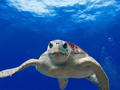 Sea Turtle Art Print by Billy Soden