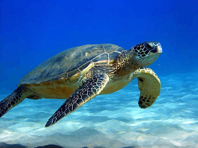 Sea Turtle Blue Art Print by Peter Oconor