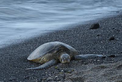 Green Sea Turtle Photograph - Sea Turtle by Christian Heeb