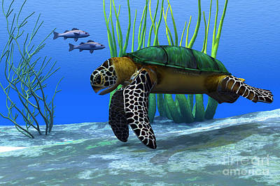 Green Sea Turtle Painting - Sea Turtle by Corey Ford