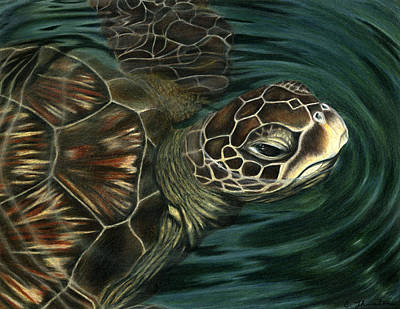 Green Sea Turtle Drawing - Sea Turtle by Corrina Thurston