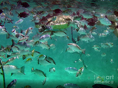 Photograph - Sea Turtle Fish And More by David Zanzinger