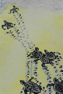 Baby Sea Turtle Painting - Baby Sea Turtle/ Hatchlings by W Gilroy