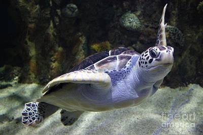 Sea Turtle Hello Art Print by Paulette Thomas
