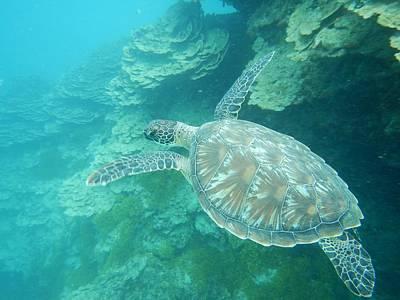 Photograph - Sea Turtle In Guam by Michael Scott