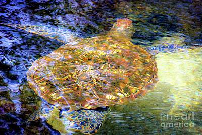 Photograph - Sea Turtle In Hawaii by D Davila