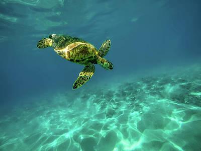 Green Sea Turtle Photograph - Sea Turtle by Jeremy Bishop