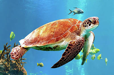 Digital Art - Sea Turtle by Jimmie Bartlett