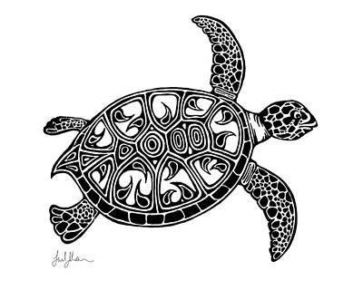 sea turtle drawings fine art america