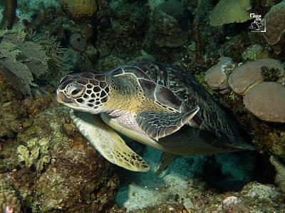 Photograph - Sea Turtle by Mau Riquelme