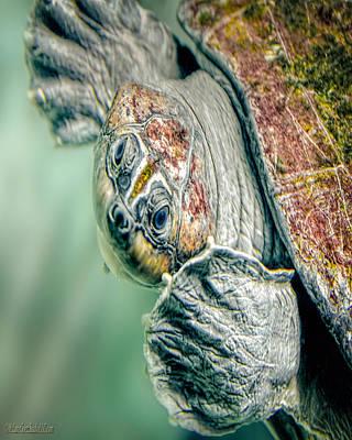 Photograph - Sea Turtle Nature Wear by LeeAnn McLaneGoetz McLaneGoetzStudioLLCcom