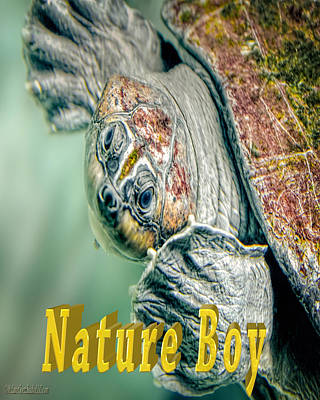 Nature Boy Photograph - Sea Turtle Natureboy by LeeAnn McLaneGoetz McLaneGoetzStudioLLCcom