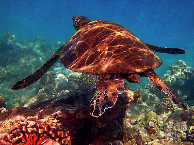 Hawaiian Green Sea Turtle Photograph - Sea Turtle On The Reef by Bette Phelan