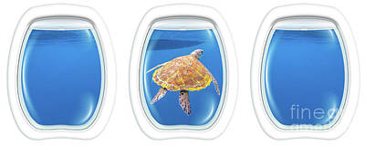 Photograph - Sea Turtle Porthole Windows by Benny Marty