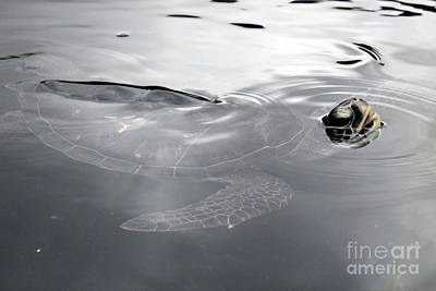 Photograph - Sea Turtle by Wilko Van de Kamp
