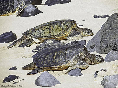 Photograph - Sea Turtles by Gena Weiser
