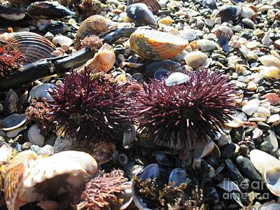 Photograph - Sea Urchins And Shells In Benalmadena by Chani Demuijlder