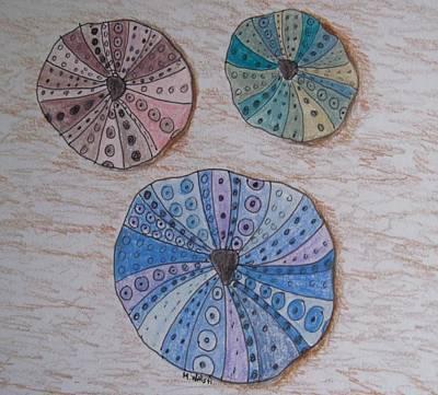 Drawing - Sea Urchins by Megan Walsh