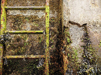 Photograph - Sea Wall Stairs by Lexa Harpell