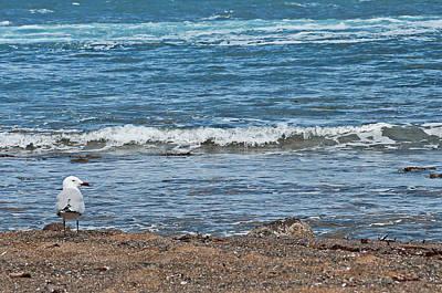 Photograph - Sea Watcher by Pedro Cardona Llambias