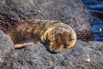 Photograph - Sea Wolf Pup by John Haldane