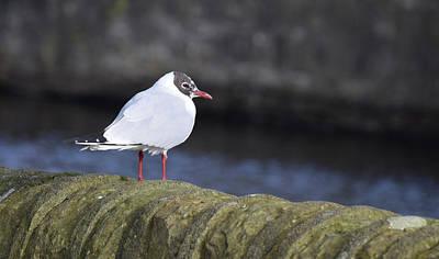 Photograph - Seabird by Dawn Richerson