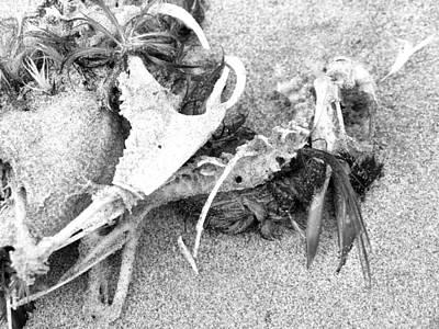 Photograph - Seabird Fatalities-2 by Tarey Potter