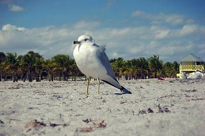 Photograph - Seabird by JAMART Photography