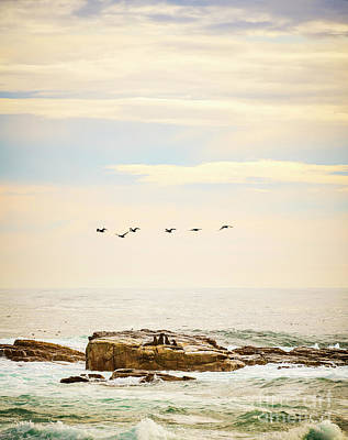 Photograph - Seabirds And Seals by Tim Hester