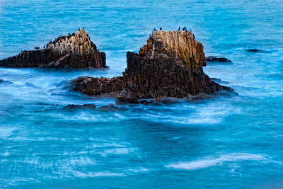 Photograph - Seabirds On Rocks by Utah Images