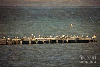 Photograph - Seabirds On The Jetty - Lake Michigan by Mary Machare