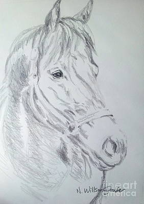 Overcoming Drawing - Seabiscuit, Nicknamed Pops by N Willson-Strader