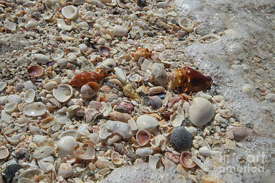 Thomas Kinkade - Seafoam and shells by Terri Winkler