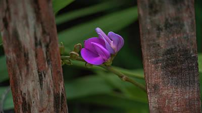Photograph - Seagrape Flower Delray Beach Florida by Lawrence S Richardson Jr