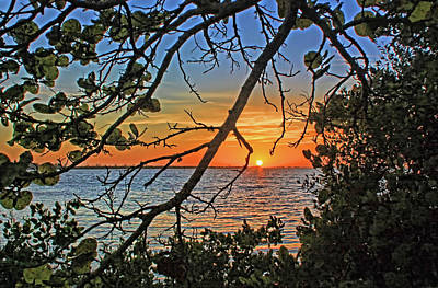 Photograph - Seagrape Sunset by HH Photography of Florida