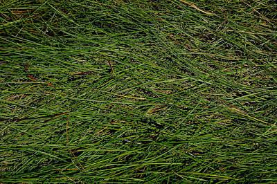 Seagrass Original by Rebecca Fulweiler