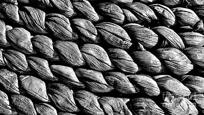 Photograph - Seagrass In Black And White by Linda Bianic