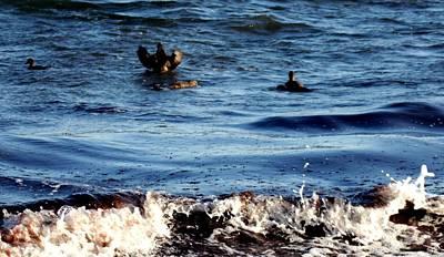 Photograph - Seagul Landing by Robert Morin
