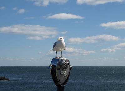 Photograph - Seagull by Mary Capriole