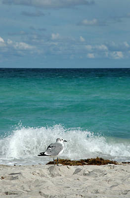 Seagull - South Beach Miami Art Print