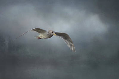 Photograph - Seagull 1 by Marilyn Wilson