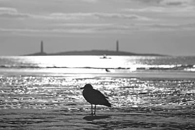 Photograph - Seagull Admiring Thacher Island Gloucester Ma Good Harbor Beach Black And White by Toby McGuire