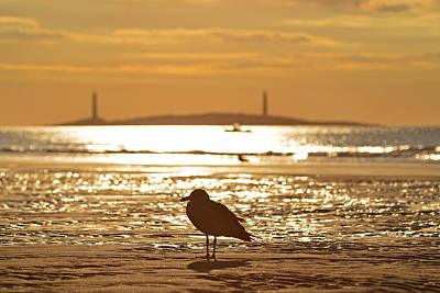 Photograph - Seagull Admiring Thacher Island Gloucester Ma Good Harbor Beach by Toby McGuire
