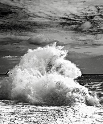 Photograph - Seagull And A Wave Bw by Michael Cinnamond