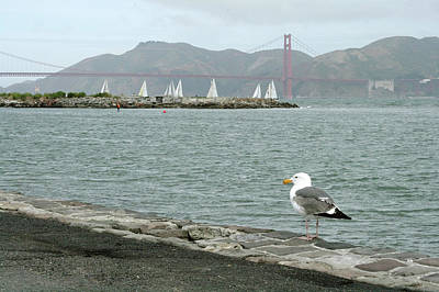 Photograph - Seagull And Golden Gate Bridge by Masha Batkova