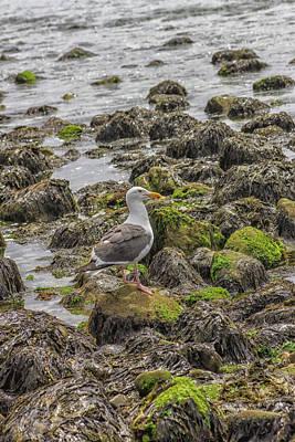 Photograph - Seagull And Rocks by Robert Hebert