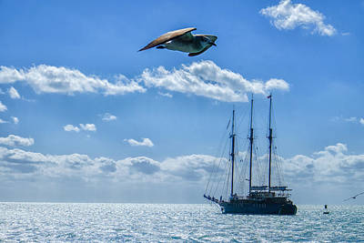 Photograph - Seagull And Tallship by John McArthur