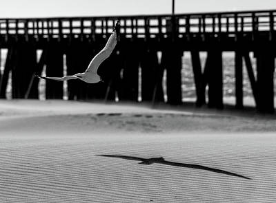 Photograph - Seagull And The Pier by John Hembree