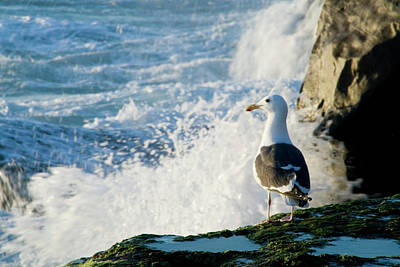 Photograph - Seagull And The Sea by Christopher Woods